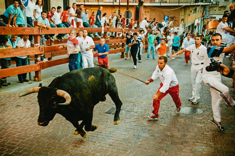 Running bulls Pamplona close up